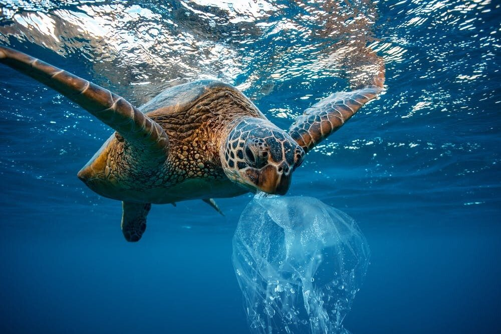 oceans plastic tide may be far larger than thought 1 - Will 30×30 reboot conservation or entrench old problems?
