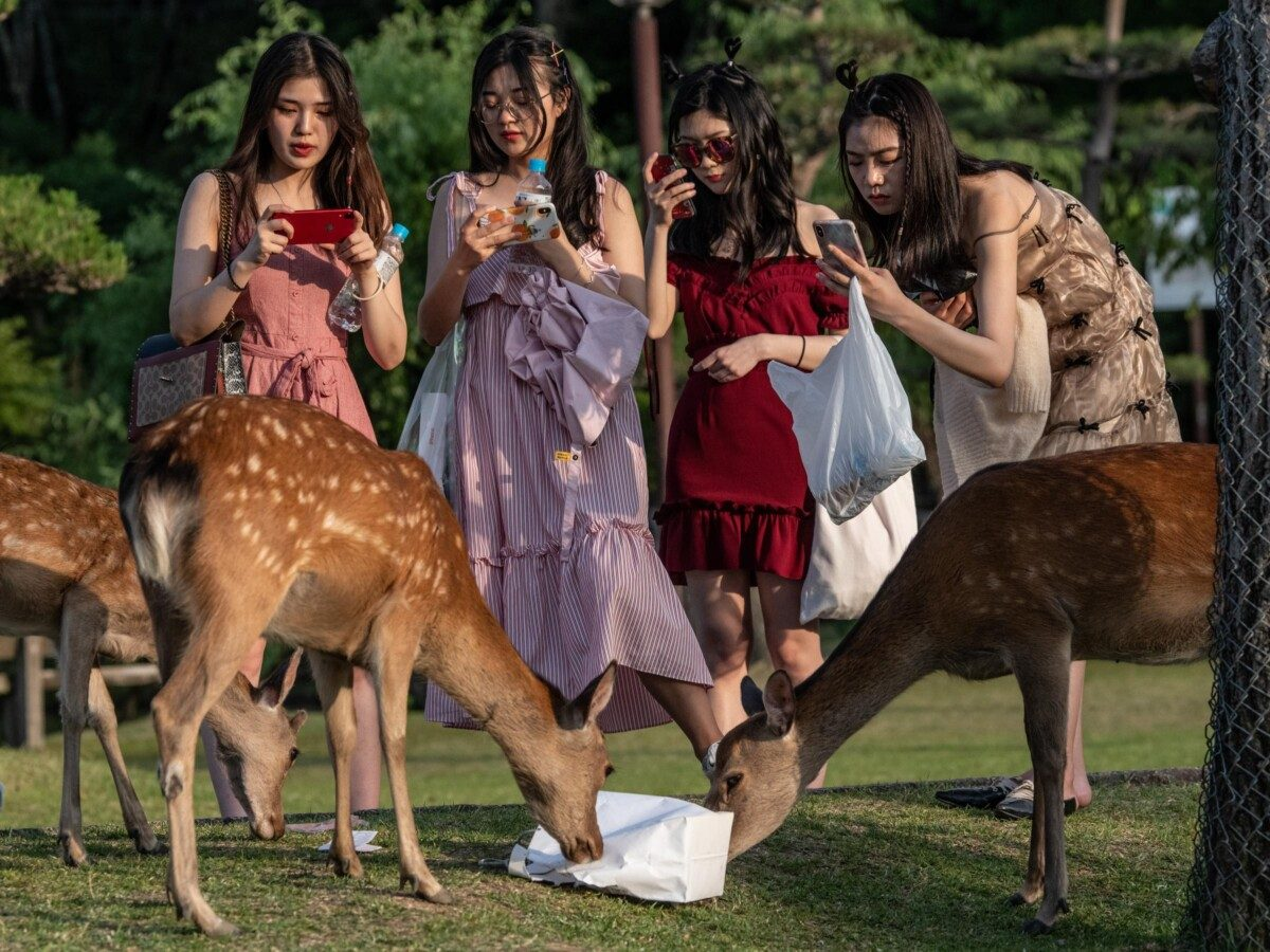 japan invents edible deer friendly bags to protect animals from plastic 1 - At least 32 injured in clashes, 20 taken into police custody