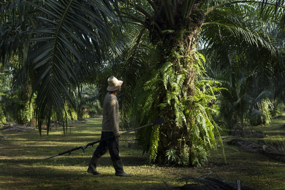 pioneering sustainable palm oil in india 1 - Deforestation from palm oil falls to three-year low