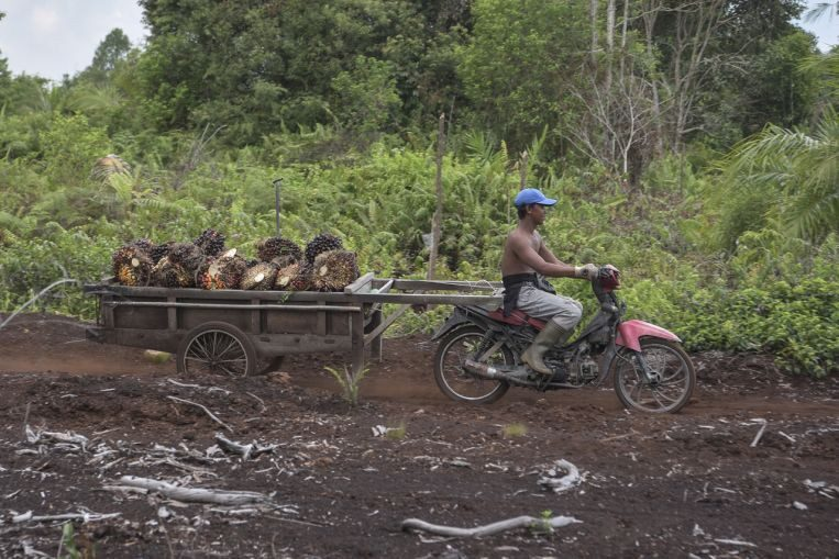 indonesia to use existing laws as palm oil moratorium expires 1 - Why has the pandemic spared the Buddhist parts of South-East Asia?