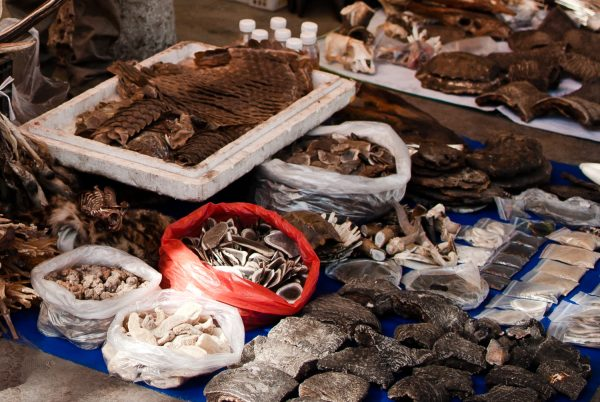 southeast asia faces narrow window to tackle endangered wildlife trade - Southeast Asia Faces Narrow Window to Tackle Endangered Wildlife Trade